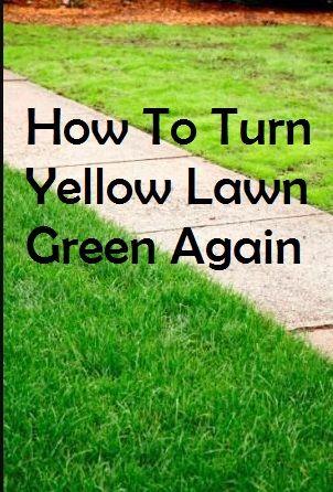 How To Turn Yellow Lawn Green Again Green Grass Yellow New Again Now Garden Green Lawn Grass Care Grass Fertilizer