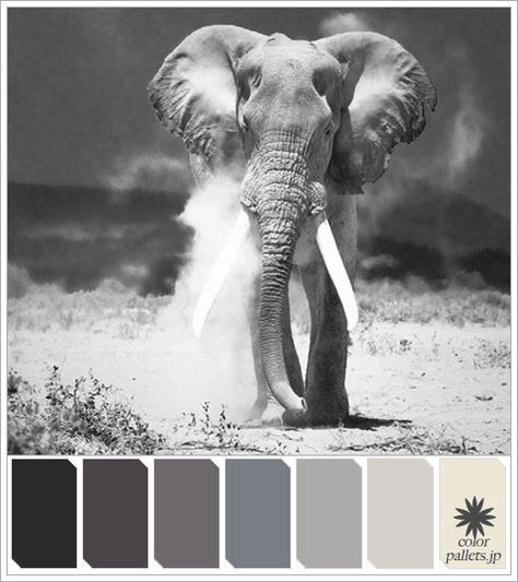 Purple Colorpallet: African Elephant Colorpallet Hues And Tones (With Images