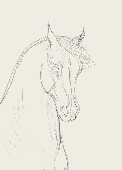 How to draw horse faces - horse faces draw - new - horse .How to draw horse faces - horse faces draw - new - horse faces draw - Create zoo animal crafts and activities, Horse Face Drawing, Horse Drawings, Cool Art Drawings, Pencil Art Drawings, Art Drawings Sketches, Animal Drawings, Drawing Drawing, Disney Drawings, Drawing Ideas