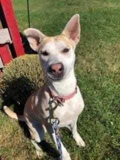 Adopt Maya On Adoption Dogs Pets