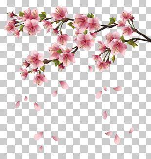 Cherry Blossom Png Images Cherry Blossom Clipart Free Download Bunga Sakura Bunga Sakura