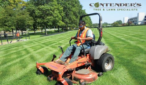 Best Tree And Lawn Services In Michigan Contender S Mi Lawn Service Lawn Care Organic Lawn