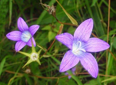 38++ Flores pequenas azules inspirations