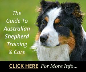 Basic Dog Training Tips Dog Caretraining Australian