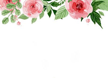 Pretty Border Hibiscus Background Photos Pretty Border Hibiscus
