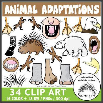 Animal Adaptations Clip Art Science Animal Adaptations Clip Art Adaptations