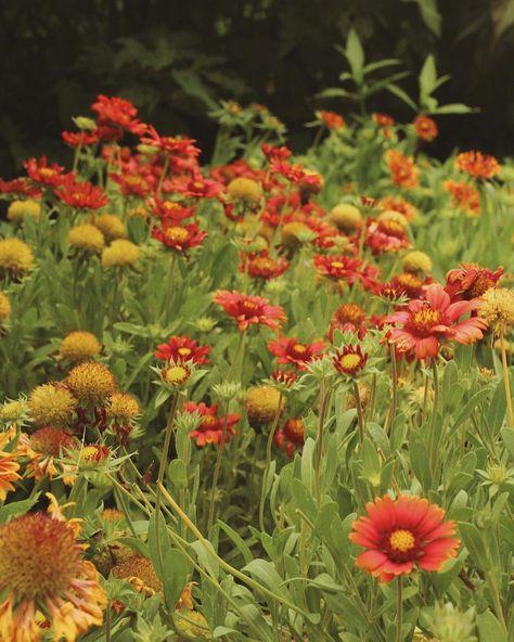 "Alecia Martinez on Instagram: ""Philbrook Garden Flowers  . . . #philbrook #philbrookmuseum #philbrookgardens #garden #flowers #tigerlily #daisy #likeforlike…"""