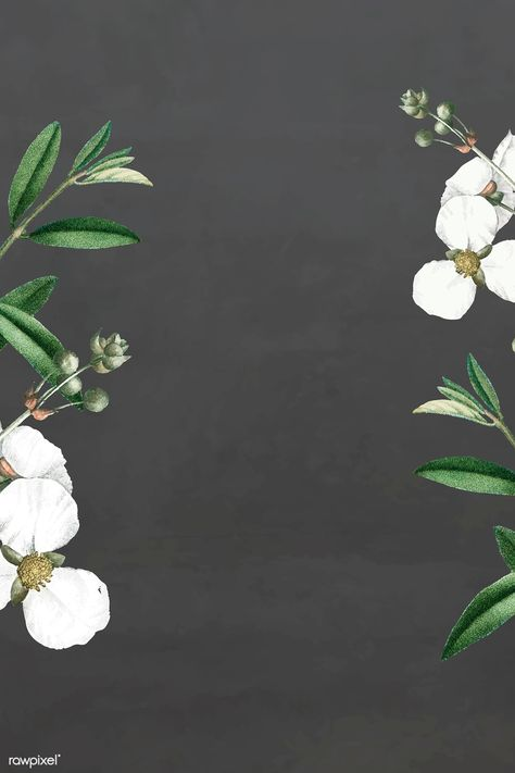 White flower on a graybackground vector template | premium image by rawpixel.com / Kappy Kappy