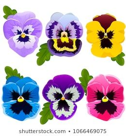 Pansy Set Of Spring Flowers Bright Flowers And Leaves Collection Flower Elements Vector Illustration Pansies Spring Flowers Bright Flowers