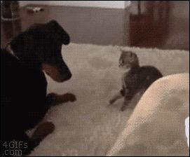15-funniest-cat-gifs-ever