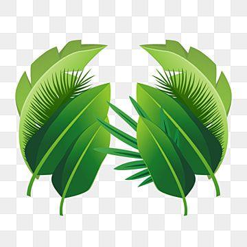 menanam daun tropis menanam tropis daun daun png transparan gambar clipart dan file psd untuk unduh gratis di 2020 tropis menanam latar belakang pinterest