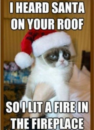 Merry Christmas Funny Meme Funny Merry Christmas Memes Grumpy Cat Humor Funny Christmas Pictures