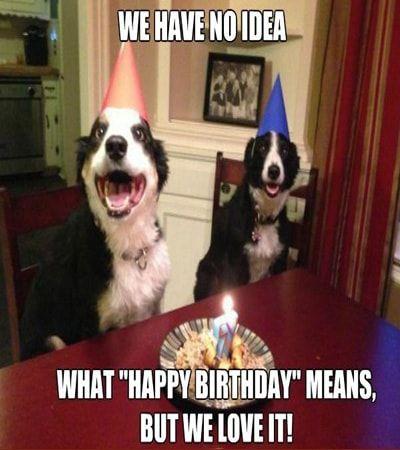 50 Happy Birthday Dog Memes Verjaardag Dieren Grappige Dieren