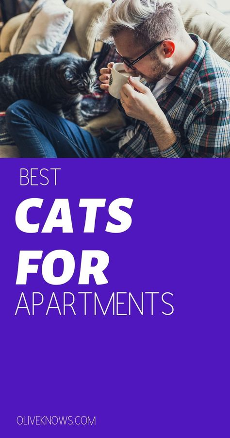 Best Cats For Apartments Cool Cats Cat Health Cat Pose
