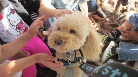 Love Dogs Visit Csn Dog Adventure Therapy Animals Therapy Dogs