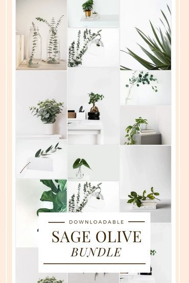 Business Creative Career Sage Olive Bundle Free To Download Simple Wallpapers Aesthetic Backgrounds Wallpaper Backgrounds