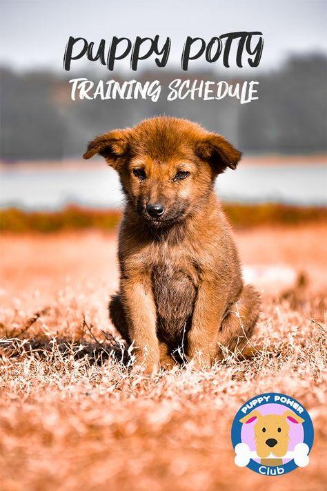 Puppy Potty Training Schedule Training Your Dog Dog Training