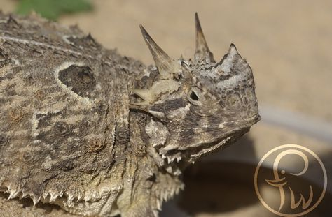 VIDA Statement Bag - Texas Spiny Lizard by VIDA h8939ju8