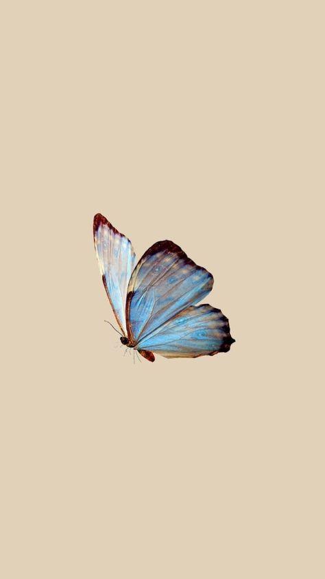 butterfly wallpaper   aesthetic, wallpaper e minimalist