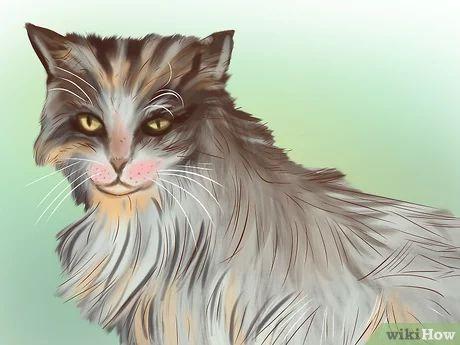 Wurmbefall Bei Katzen Erkennen Katzen Katzen Sprache Und Katzen