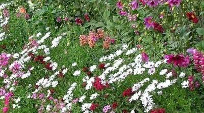 Sadzenie Cebulek Kwiatowych Do Doniczek Zielony Ogrodek Plants