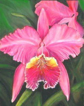 Cataleya Colombian Flower Tattoo Catalaya Related Keywords Mana Vietne Artes Plasticas Tatoo Plasticos