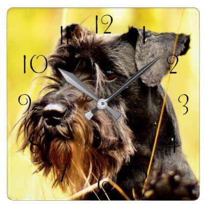 Miniature Schnauzer Square Wall Clock Animal Gift Ideas Animals And Pets Diy Customize Miniature Schnauzer Puppies Cool Pets Schnauzer Puppy