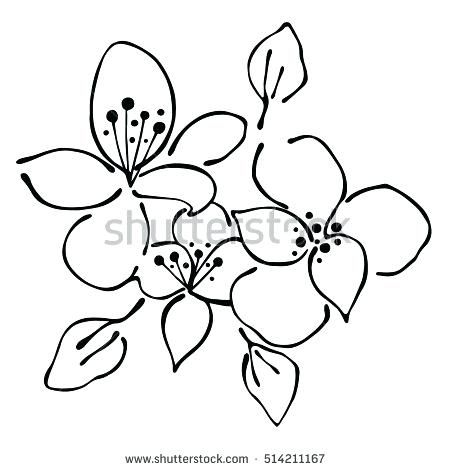 Violet Flower Coloring Page Free Printable Coloring Pages
