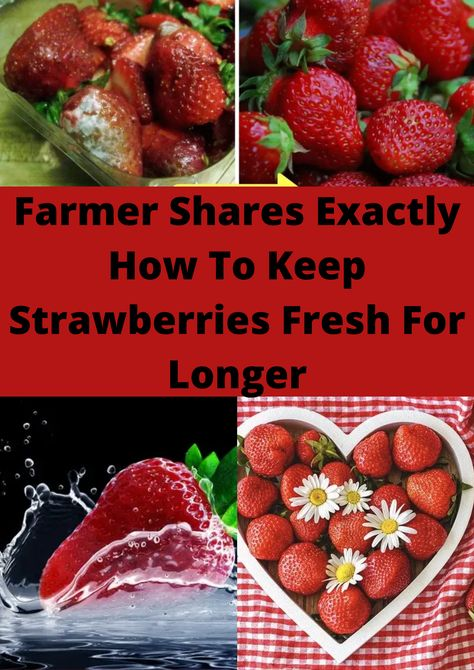 Farmer Shares Exactly How To Keep Strawberries Fresh For Longer
