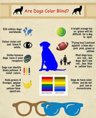 Are Dogs Color Blind: The Question | Color blind, Blind dog