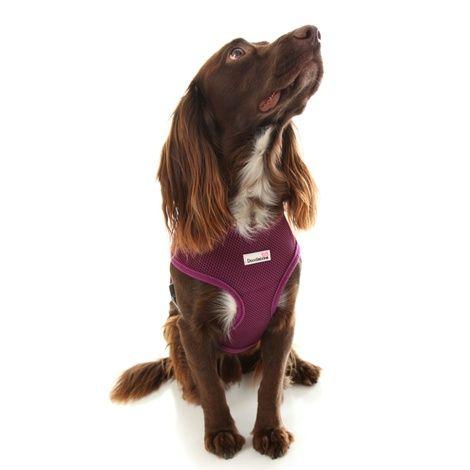 Airmesh Dog Harness Purple Dog Harness Dogs Dog Safety
