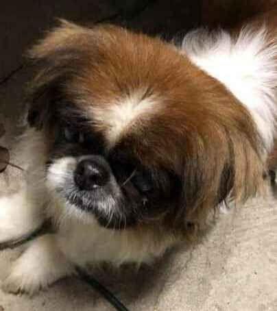 Found Dog Columbus Oh Usa 43147 On January 03 2019 12 00 Pm Dogs Pet Home Columbus