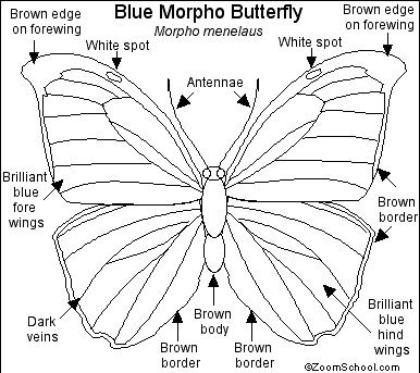 Blue Morpho Butterfly Quilling Butterfly Line Drawing Blue