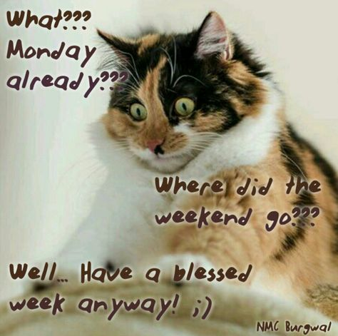 Have a blessed week