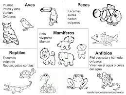 Hojas De Trabajo De Animales Mamiferos Para Niños Buscar Con Google Vertebrados E Invertebrados Animales Viviparos Animales Vertebrados