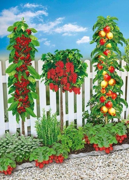 Mein Schoner Garten Naschbeet Pflanzfertig 10 Pflanzen Gunstig Online Kaufen Garten Gunstig Kaufen Mein Naschbeet On Plants Garden Floral Wreath