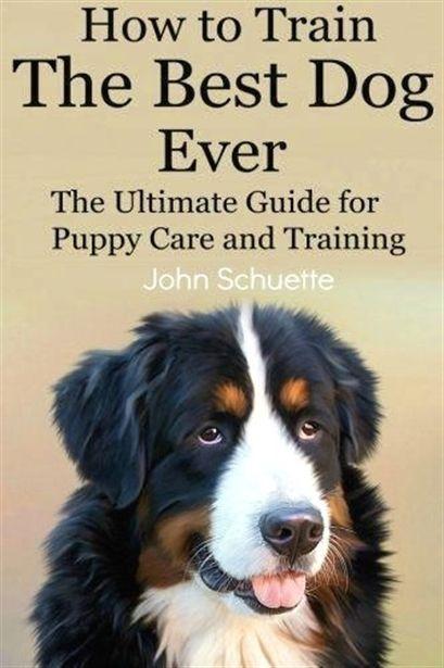 Dog Training Des Moines Dog Training Prices Dog Training 4