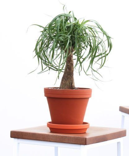 The Most Popular Indoor Plants Of 2019 And Their Perfect Planter