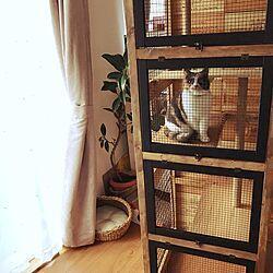 棚 キャットハウス ワイヤーネット 小さなおうち こどもと暮らす などのインテリア実例 2016 12 09 10 17 24 Roomclip ルームクリップ 2021 キャットハウス 猫用ケージ 猫 ケージ Diy