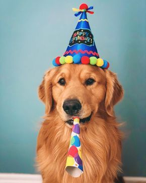 Happy Birthday Dog Birthday Goldenretriever Happy Birthday Dog Dog Birthday Dogs Golden Retriever