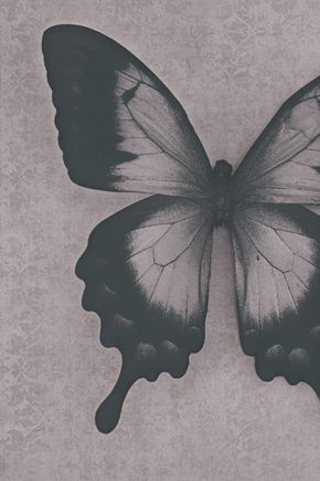 Damask Butterfly Abstract Black And White Photograph Print Butterfly Black And White White Sunflowers Butterfly Photos