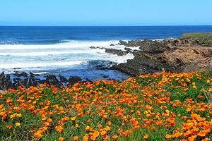 18 Top-Rated Day Trips from San Luis Obispo, CA | PlanetWare