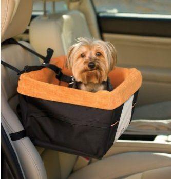 adorable dog...skydog booster seat