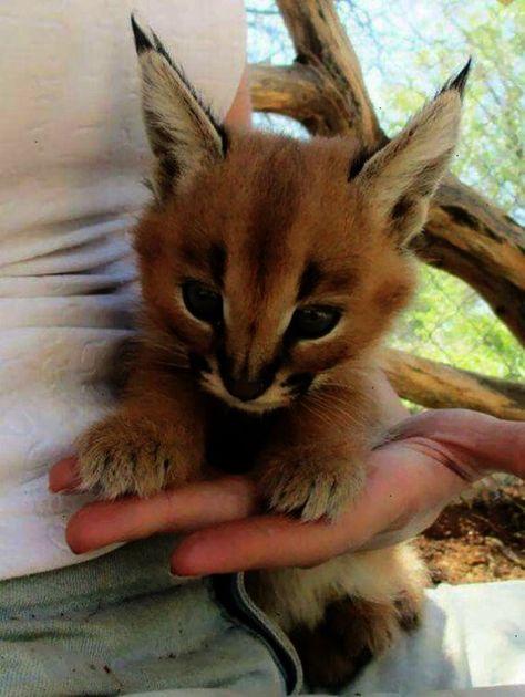 Shared Cute Animals Gifs Reddit Facebook Cute Animals Cute