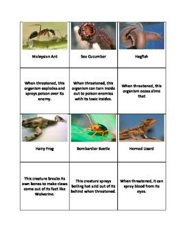 Animal Adaptations Matching Defense Mechanisms Animal