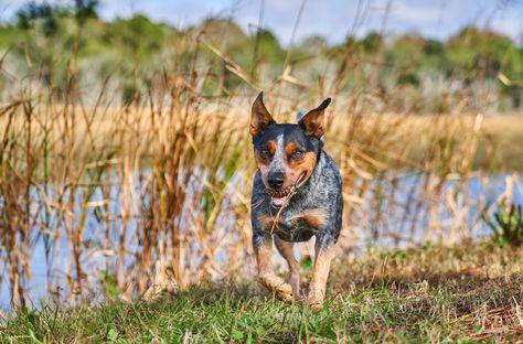 dogphotography Visit RyanTalbot.Net and Book...