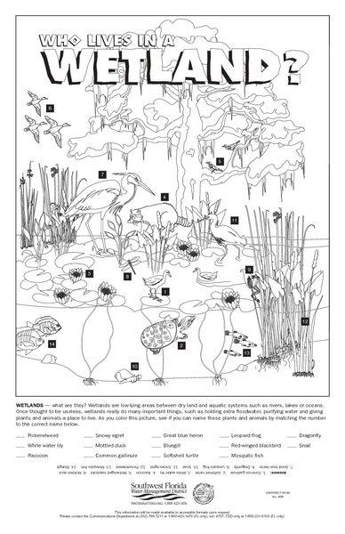 Wetlands Worksheets Calleveryonedaveday Wetland Worksheets
