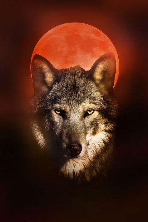 Blechschild Fantasie Bild Motiv  Wolf Totem