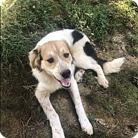 Memphis Tennessee Husky Meet Jack A For Adoption Https Www
