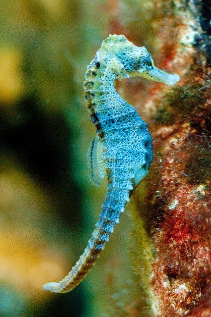 Seahorse Beautiful Sea Creatures Sea Animals Underwater Animals